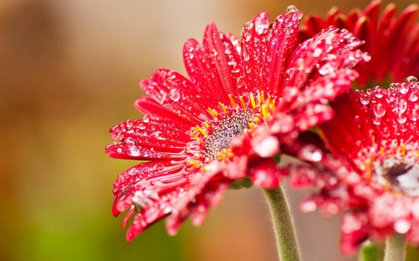 fotos-con-flores-4