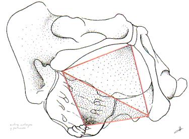 Rombo-del-suelo-pélvico